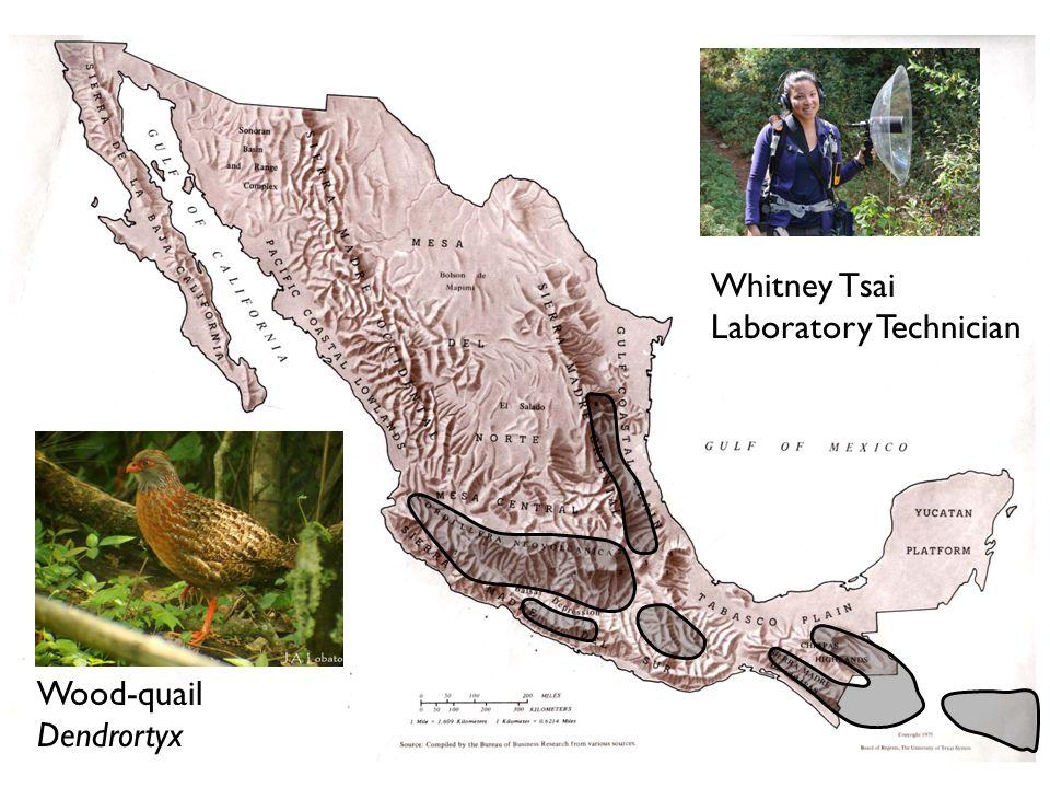 Whitney Tsai Laboratory Technician Wood-quail Dendrortyx