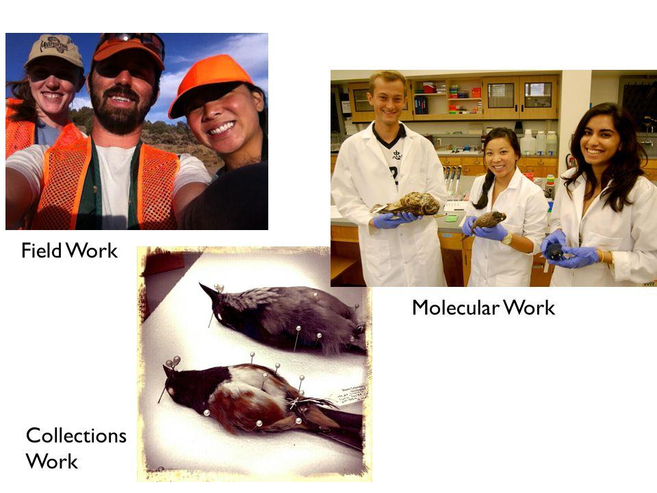 Field Work Collections Work Molecular Work