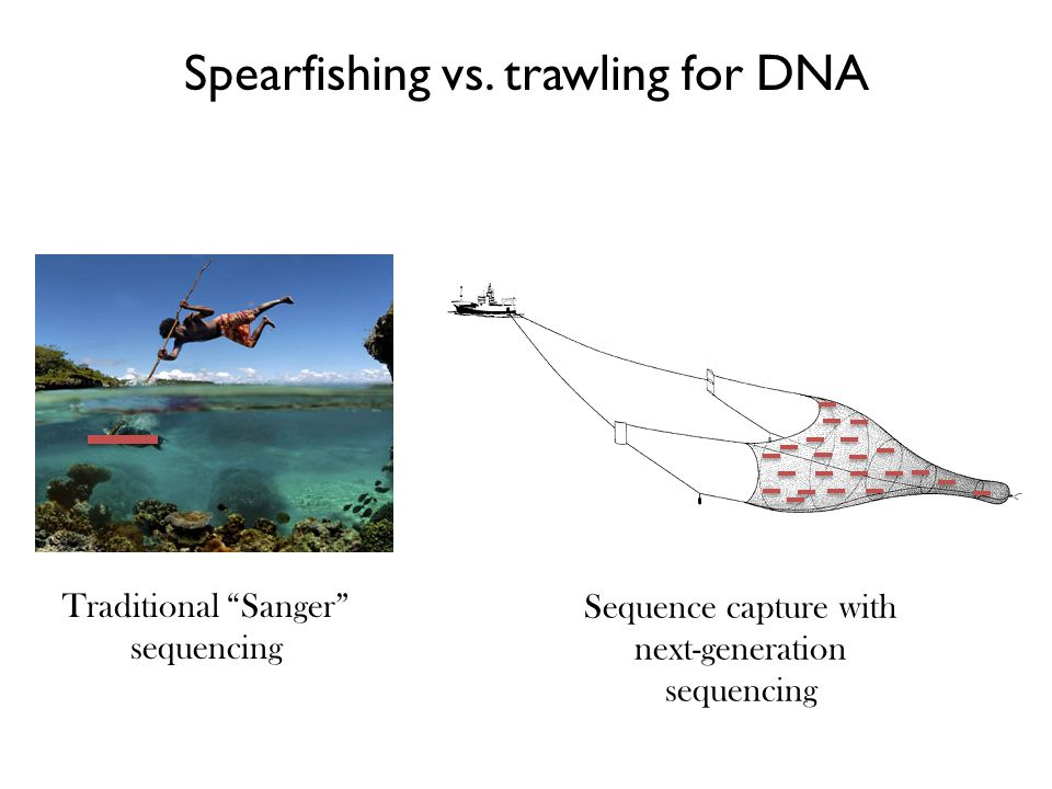 "Spearfishing vs. trawling for DNA Traditional ""Sanger"" sequencing Sequence capture with next-generation sequencing"