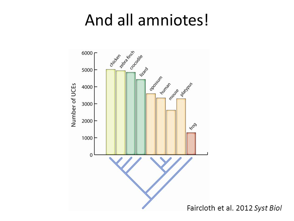 Faircloth et al. 2012 Syst Biol And all amniotes!