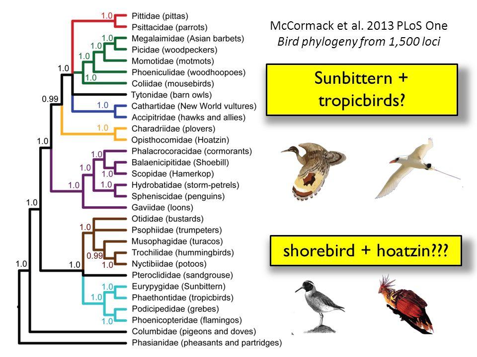 Sunbittern + tropicbirds. shorebird + hoatzin . McCormack et al.