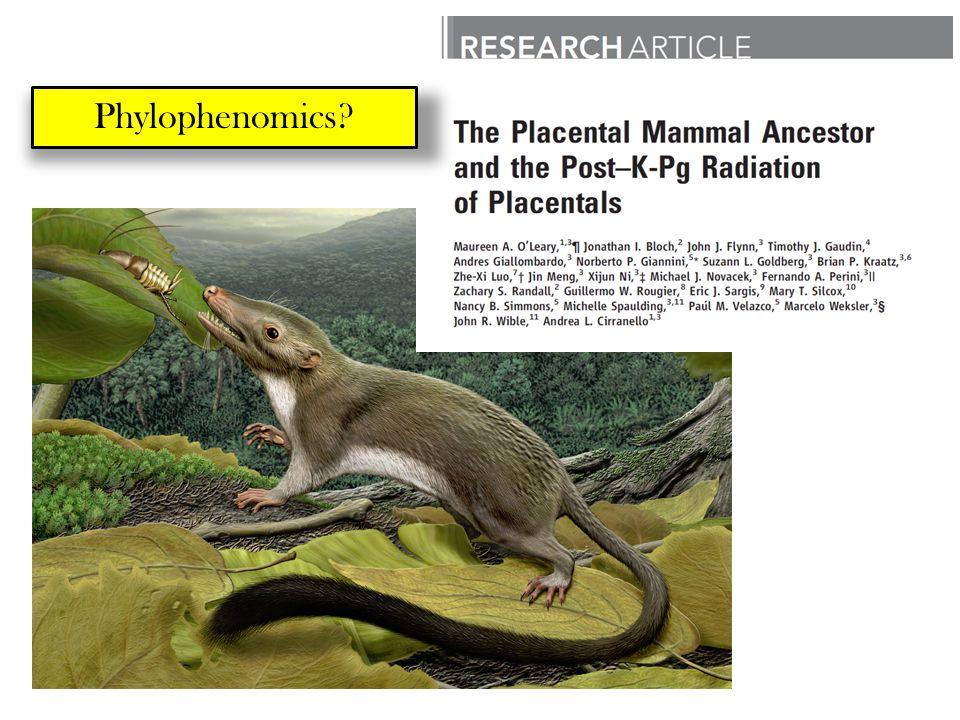 Phylophenomics
