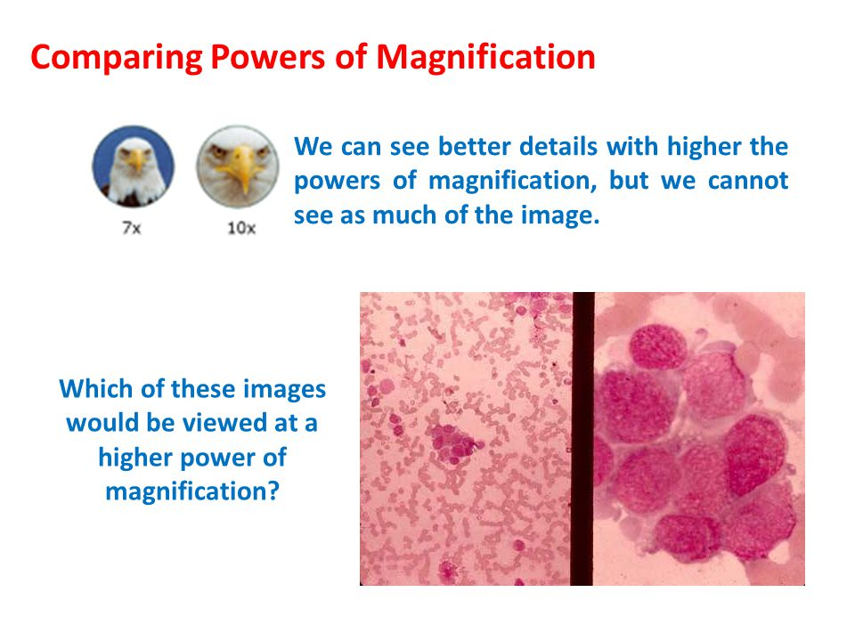 Comparing Powers of Magnification We can see better details with higher the powers of magnification, but we cannot see as much of the image. Which of