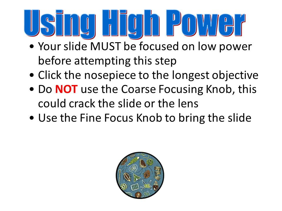 Your slide MUST be focused on low power before attempting this step Click the nosepiece to the longest objective Do NOT use the Coarse Focusing Knob, this could crack the slide or the lens Use the Fine Focus Knob to bring the slide