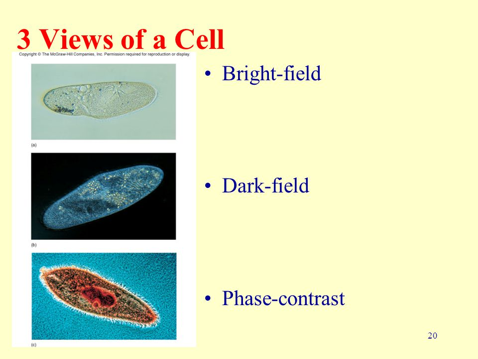 20 3 Views of a Cell Bright-field Dark-field Phase-contrast