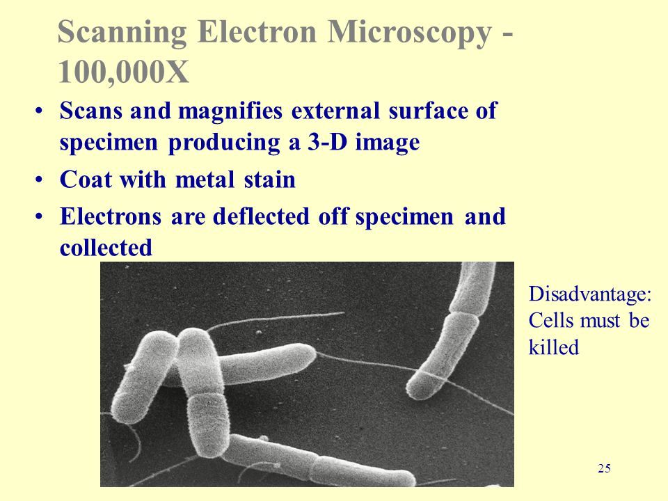 25 Scanning Electron Microscopy - 100,000X Scans and magnifies external surface of specimen producing a 3-D image Coat with metal stain Electrons are deflected off specimen and collected Disadvantage: Cells must be killed