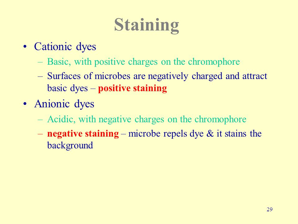 29 Staining Cationic dyes –Basic, with positive charges on the chromophore –Surfaces of microbes are negatively charged and attract basic dyes – positive staining Anionic dyes –Acidic, with negative charges on the chromophore –negative staining – microbe repels dye & it stains the background