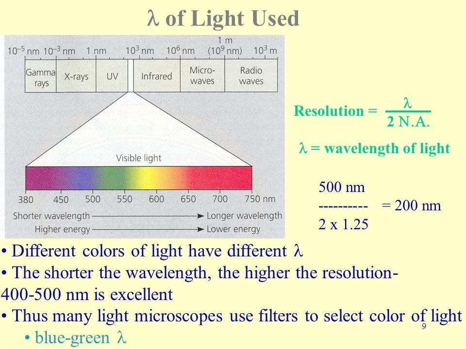 9 of Light Used Different colors of light have different The shorter the wavelength, the higher the resolution- 400-500 nm is excellent Thus many light microscopes use filters to select color of light blue-green 2  Resolution = = wavelength of light 500 nm ---------- = 200 nm 2 x 1.25