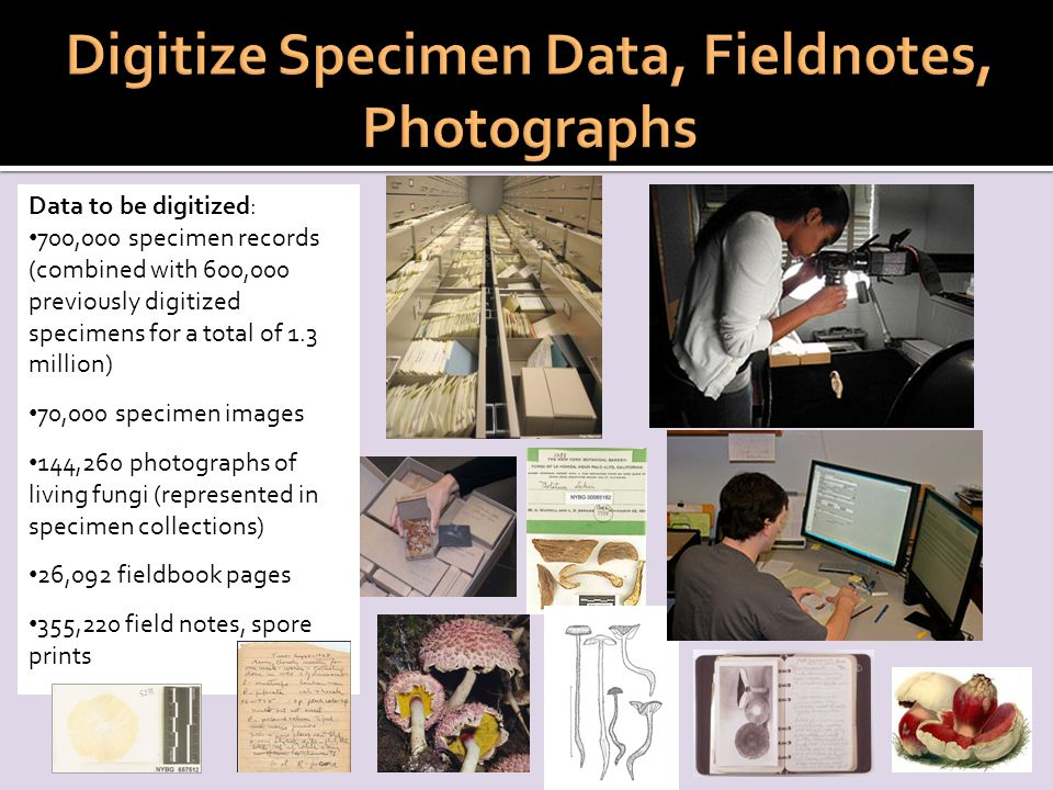 Data to be digitized: 700,000 specimen records (combined with 600,000 previously digitized specimens for a total of 1.3 million) 70,000 specimen images 144,260 photographs of living fungi (represented in specimen collections) 26,092 fieldbook pages 355,220 field notes, spore prints