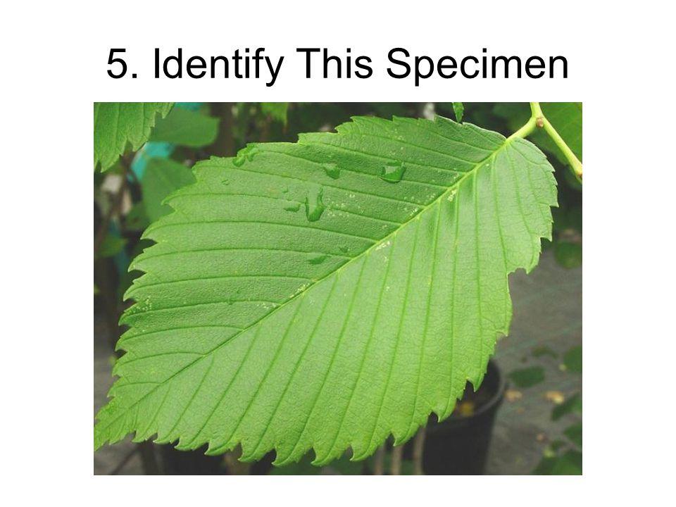 5. Identify This Specimen