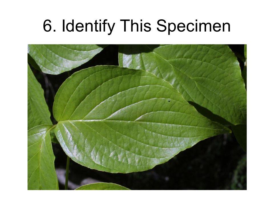 6. Identify This Specimen
