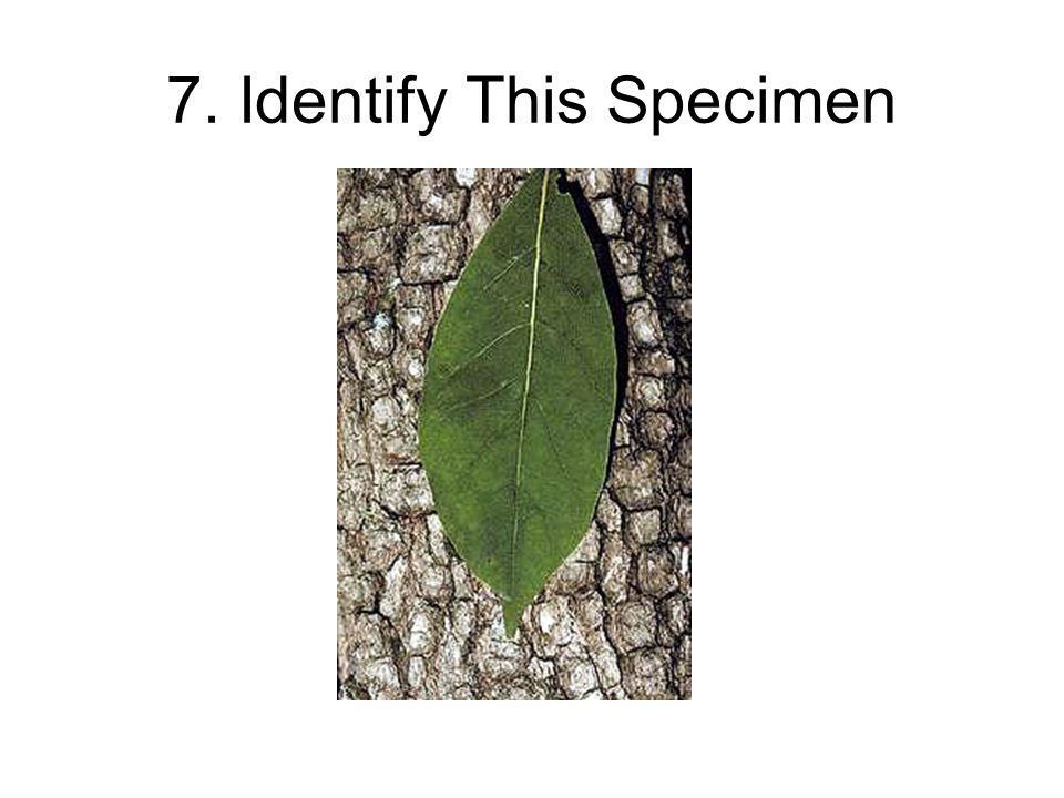 7. Identify This Specimen