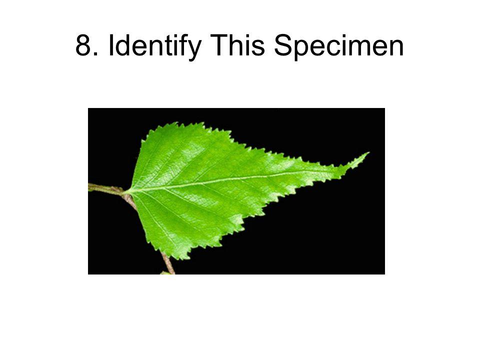8. Identify This Specimen