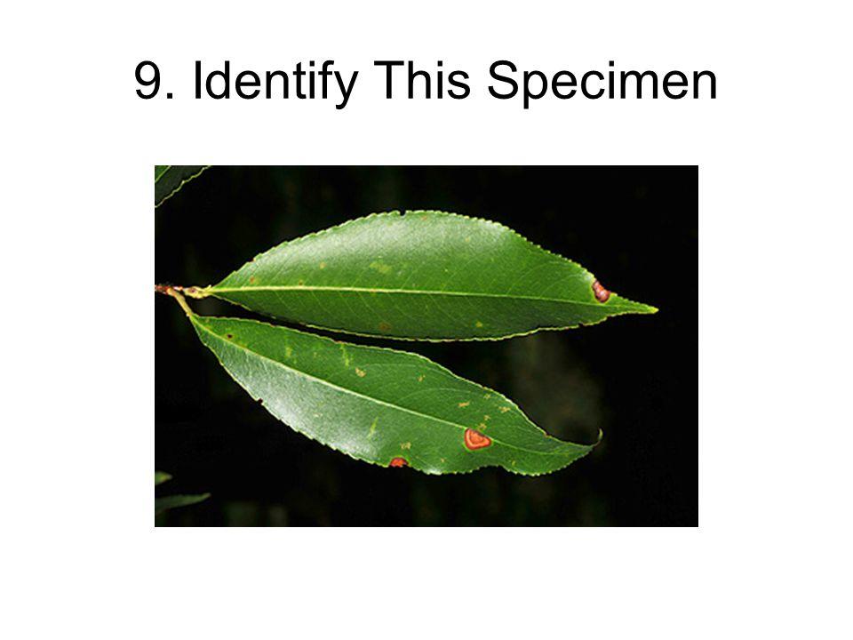 9. Identify This Specimen
