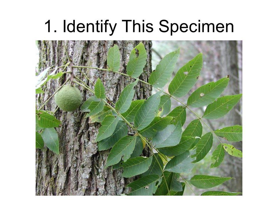 1. Identify This Specimen