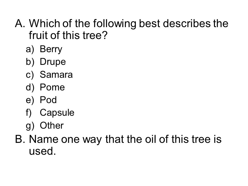 A.Which of the following best describes the fruit of this tree.