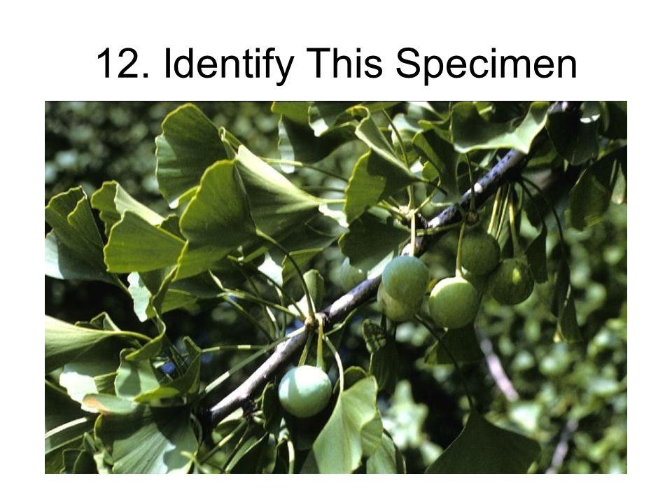 12. Identify This Specimen
