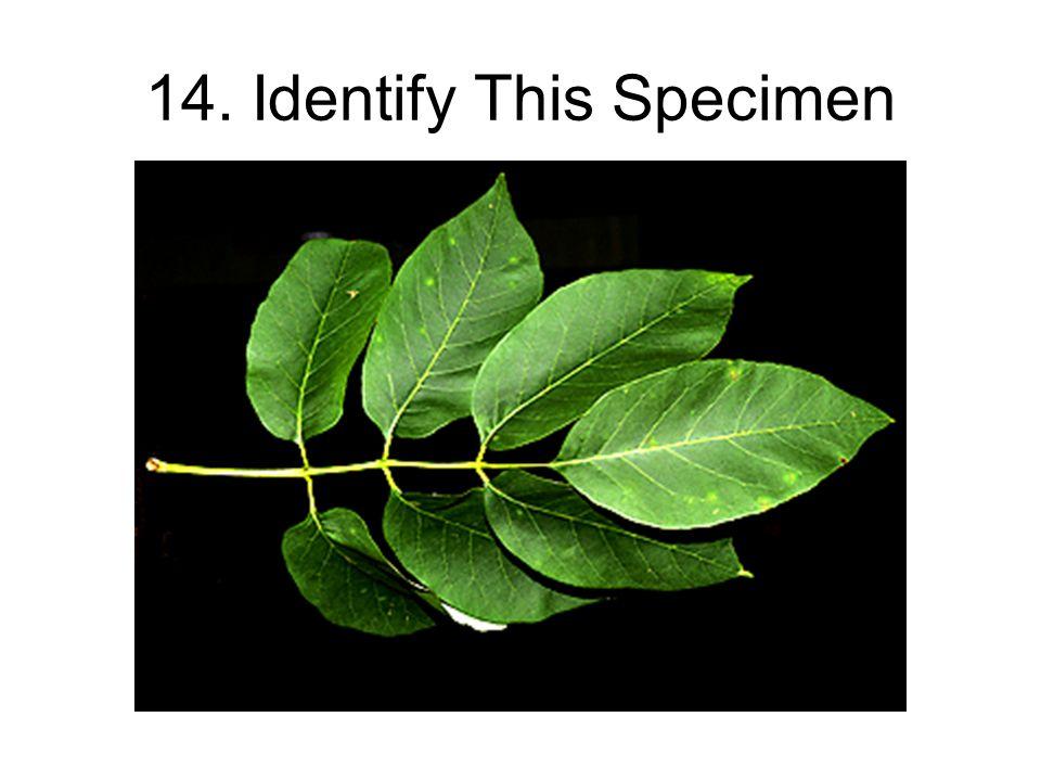 14. Identify This Specimen