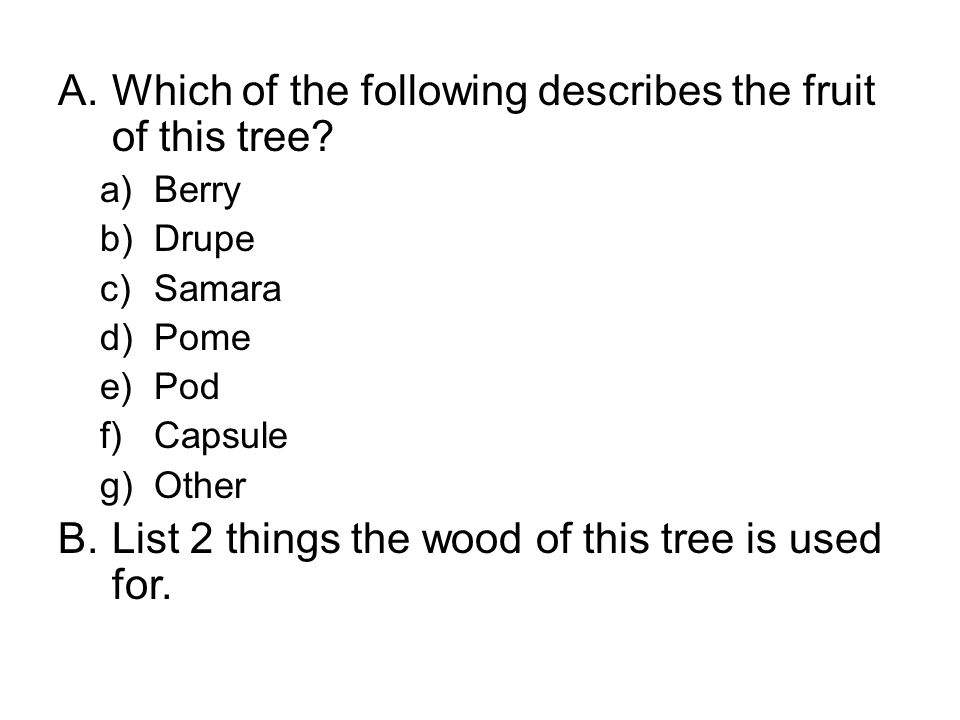 A.Which of the following describes the fruit of this tree.