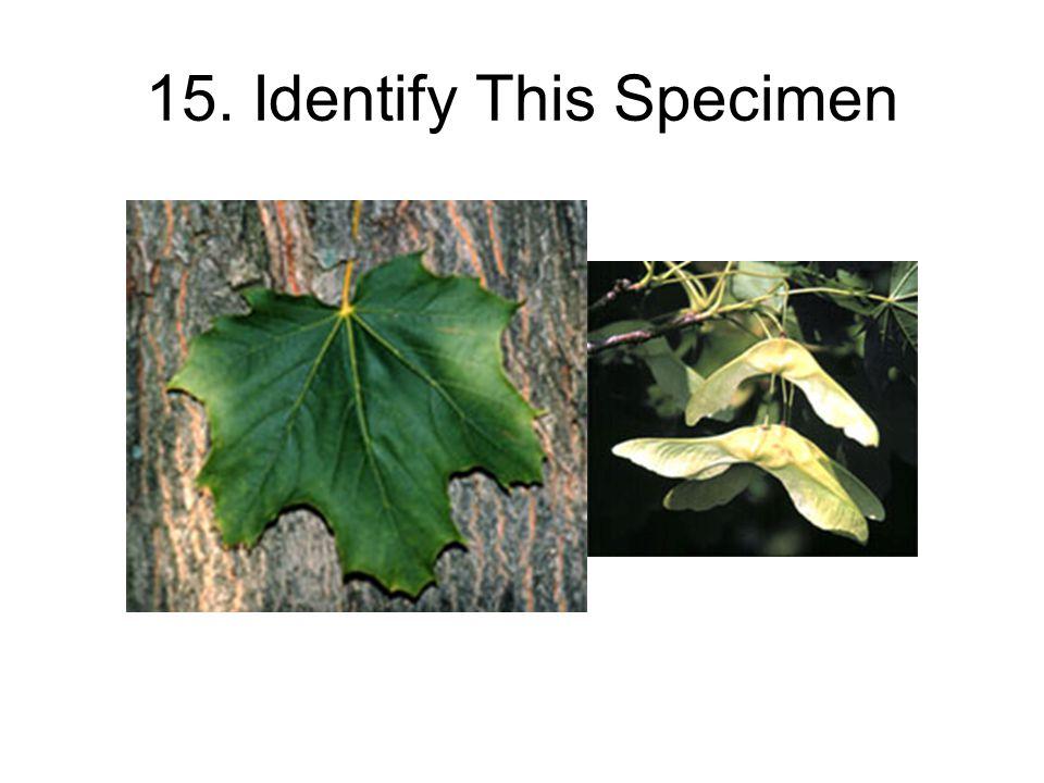 15. Identify This Specimen