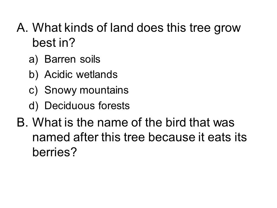 A.What kinds of land does this tree grow best in.