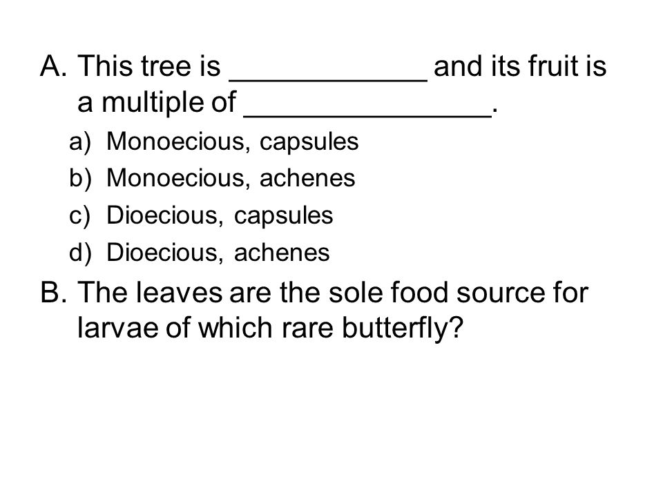 A.This tree is ____________ and its fruit is a multiple of _______________. a)Monoecious, capsules b)Monoecious, achenes c)Dioecious, capsules d)Dioec