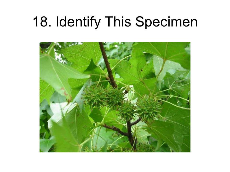 18. Identify This Specimen