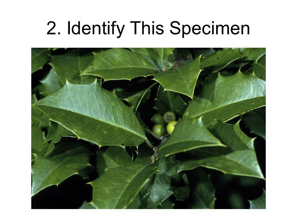 2. Identify This Specimen