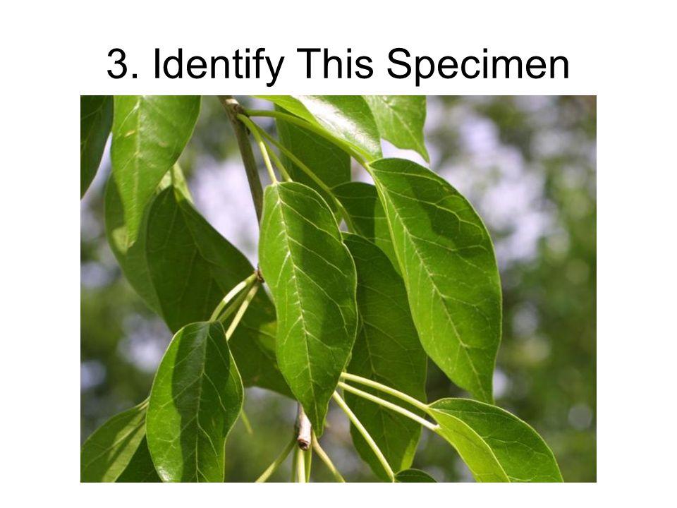 3. Identify This Specimen