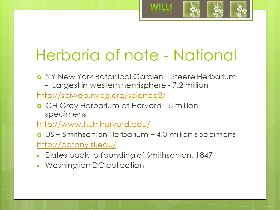 Herbaria of note - National  NY New York Botanical Garden – Steere Herbarium - Largest in western hemisphere - 7.2 million http://sciweb.nybg.org/science2/  GH Gray Herbarium at Harvard - 5 million specimens http://www.huh.harvard.edu/  US – Smithsonian Herbarium – 4.3 million specimens http://botany.si.edu/  Dates back to founding of Smithsonian, 1847  Washington DC collection
