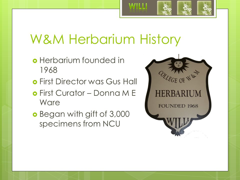 W&M Herbarium History  Herbarium founded in 1968  First Director was Gus Hall  First Curator – Donna M E Ware  Began with gift of 3,000 specimens from NCU