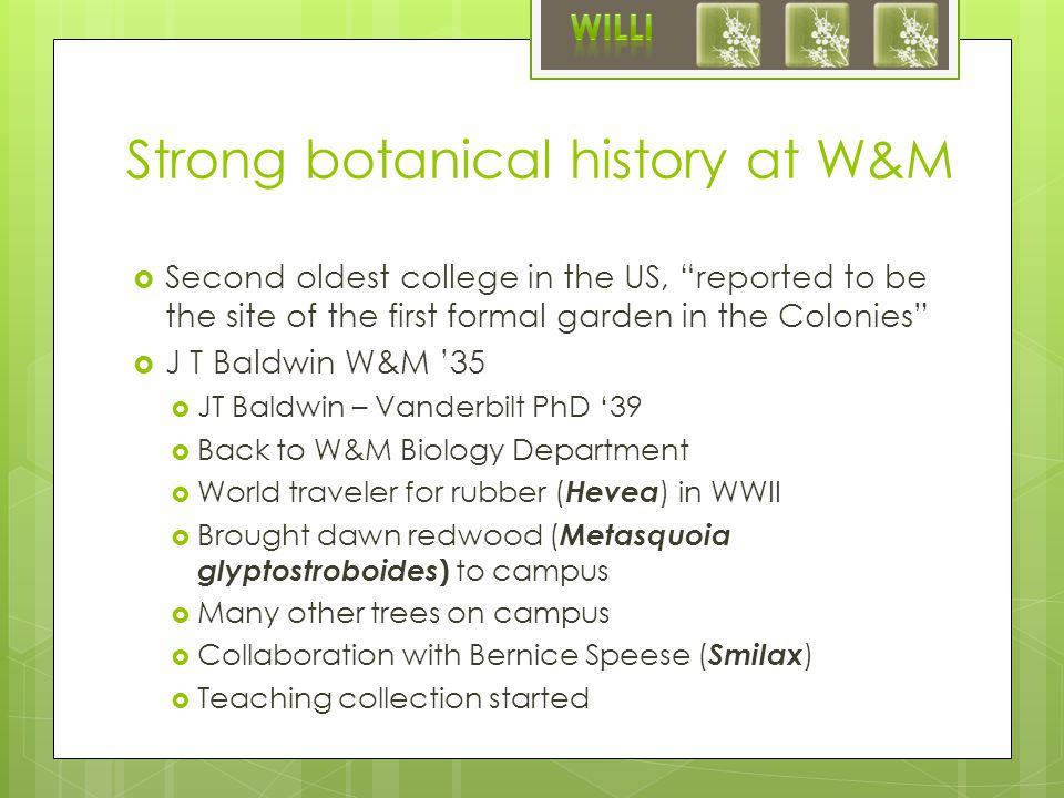 Strong botanical history at W&M  Second oldest college in the US, reported to be the site of the first formal garden in the Colonies  J T Baldwin W&M '35  JT Baldwin – Vanderbilt PhD '39  Back to W&M Biology Department  World traveler for rubber ( Hevea ) in WWII  Brought dawn redwood ( Metasquoia glyptostroboides ) to campus  Many other trees on campus  Collaboration with Bernice Speese ( Smilax )  Teaching collection started