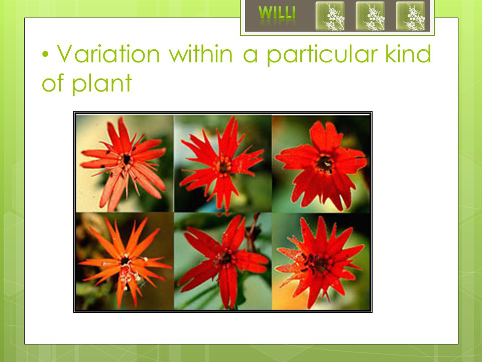 Variation within a particular kind of plant