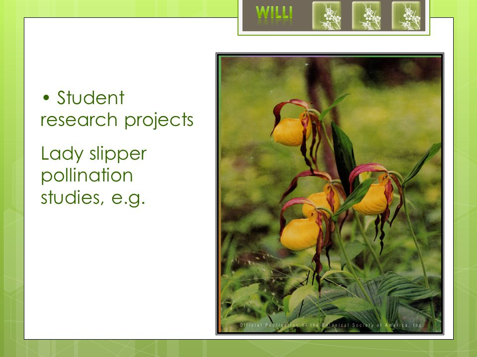 Student research projects Lady slipper pollination studies, e.g.