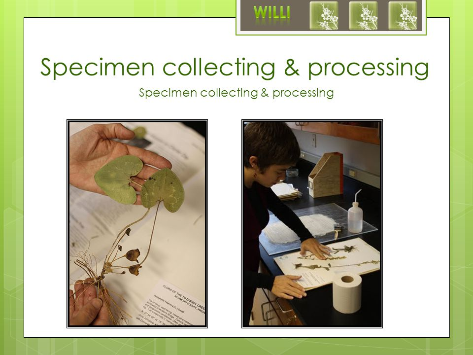 Specimen collecting & processing