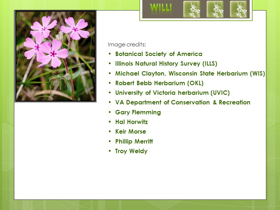 Image credits: Botanical Society of America Illinois Natural History Survey (ILLS) Michael Clayton, Wisconsin State Herbarium (WIS) Robert Bebb Herbarium (OKL) University of Victoria herbarium (UVIC) VA Department of Conservation & Recreation Gary Flemming Hal Horwitz Keir Morse Phillip Merritt Troy Weldy
