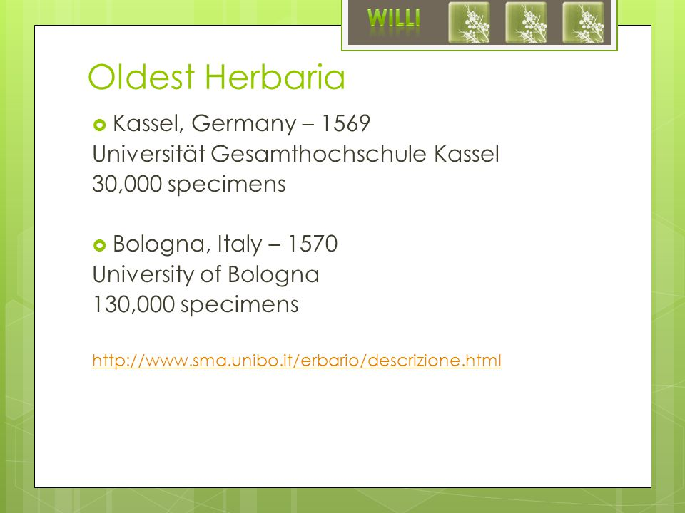 Oldest Herbaria  Kassel, Germany – 1569 Universität Gesamthochschule Kassel 30,000 specimens  Bologna, Italy – 1570 University of Bologna 130,000 specimens http://www.sma.unibo.it/erbario/descrizione.html