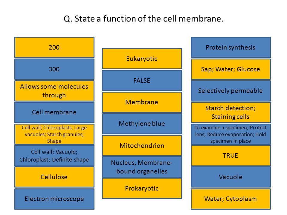 Q. State a function of the cell membrane.