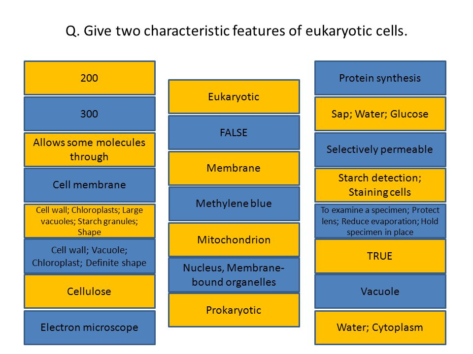 Q. Give two characteristic features of eukaryotic cells.