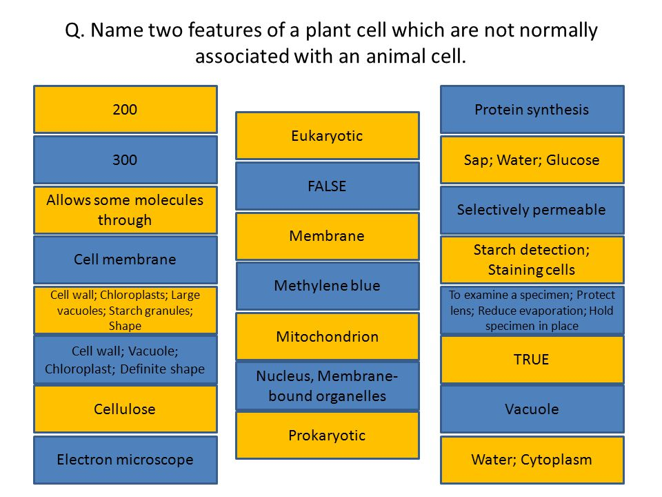 Q. Name two features of a plant cell which are not normally associated with an animal cell.