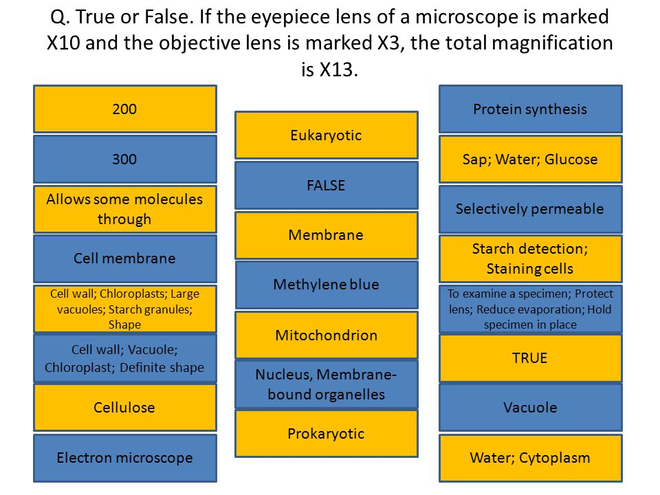 Q. True or False. If the eyepiece lens of a microscope is marked X10 and the objective lens is marked X3, the total magnification is X13. 200 Cell mem