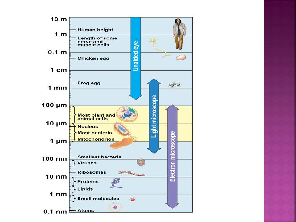  Dino Lite: In the 21st century Dino-Lite Digital microscopes handheld.