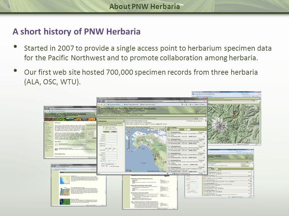 About PNW Herbaria A short history of PNW Herbaria Started in 2007 to provide a single access point to herbarium specimen data for the Pacific Northwest and to promote collaboration among herbaria.
