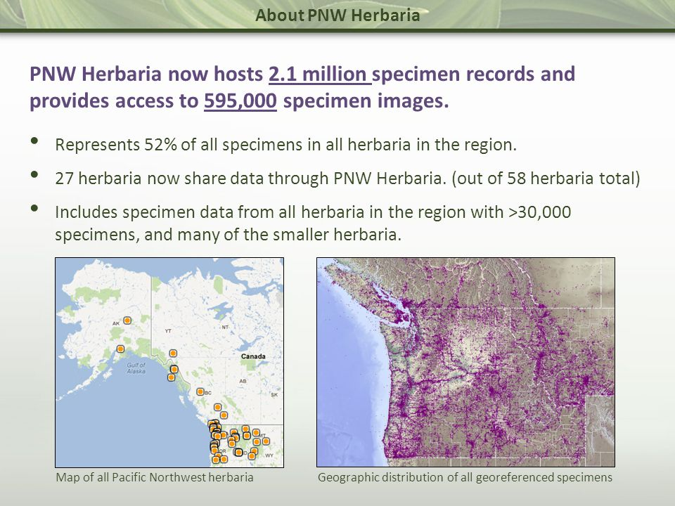 About PNW Herbaria Software & Workflows Specimen imaging.