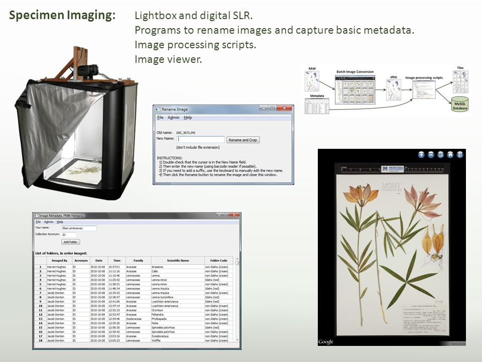 Specimen Imaging: Lightbox and digital SLR. Programs to rename images and capture basic metadata.