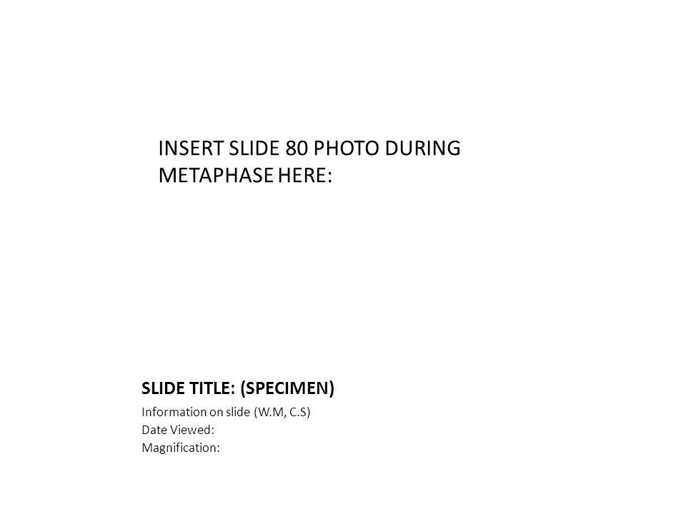 SLIDE TITLE: (SPECIMEN) Information on slide (W.M, C.S) Date Viewed: Magnification: INSERT SLIDE 80 PHOTO DURING METAPHASE HERE: