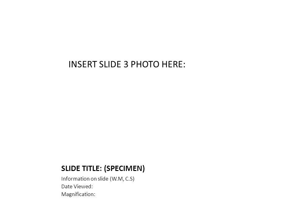 SLIDE TITLE: (SPECIMEN) Information on slide (W.M, C.S) Date Viewed: Magnification: INSERT SLIDE 3 PHOTO HERE: