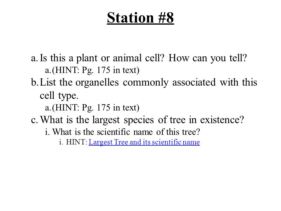 Station #8 a.Is this a plant or animal cell.How can you tell.