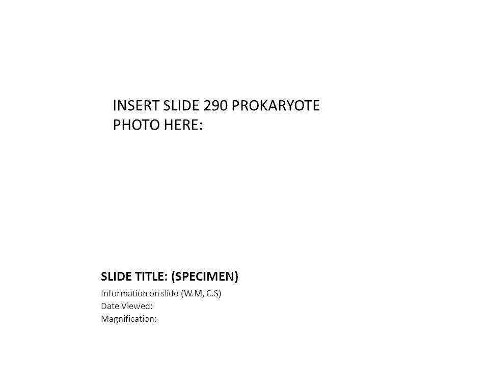 SLIDE TITLE: (SPECIMEN) Information on slide (W.M, C.S) Date Viewed: Magnification: INSERT SLIDE 290 PROKARYOTE PHOTO HERE: