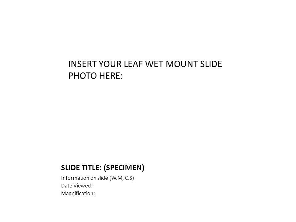 SLIDE TITLE: (SPECIMEN) Information on slide (W.M, C.S) Date Viewed: Magnification: INSERT YOUR LEAF WET MOUNT SLIDE PHOTO HERE: